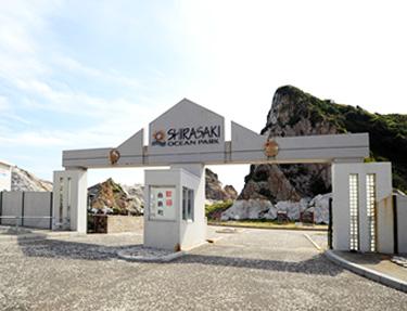 shirasaki2